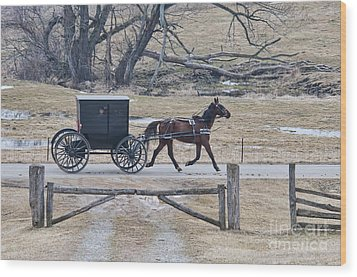 Amish Horse And Buggy March 2013 Wood Print