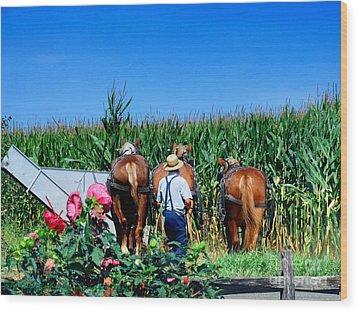 Amish Plowing Wood Print by Gena Weiser