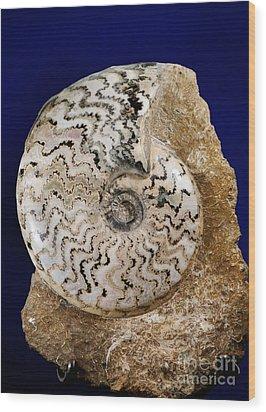 Ammonite Fossil Wood Print by Scott Camazine