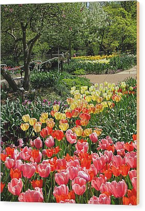 Wood Print featuring the photograph Among Tulips by John Freidenberg