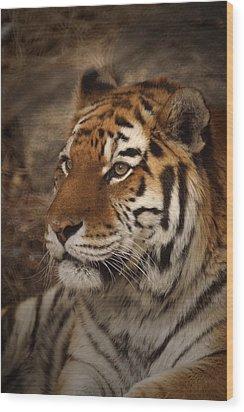 Amur Tiger 2 Wood Print
