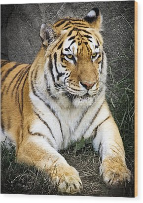 Amur Tiger Wood Print by Adam Romanowicz