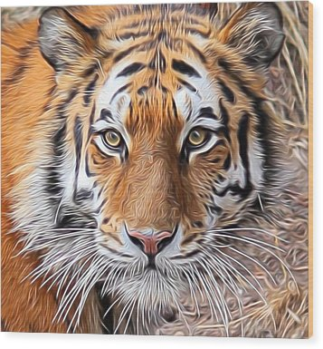 Amur Tiger Portrait Wood Print by Diane Alexander
