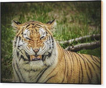 Amur Tiger Smile Wood Print by LeeAnn McLaneGoetz McLaneGoetzStudioLLCcom