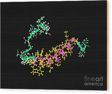 Amyloid Beta Peptide Wood Print by Leonard Lessin
