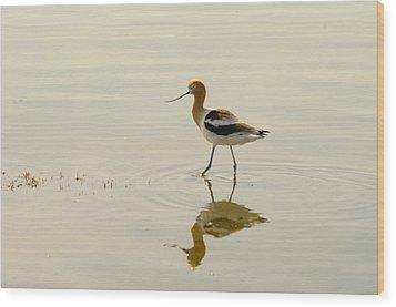 An Avocet Walking The Shore Wood Print by Jeff Swan