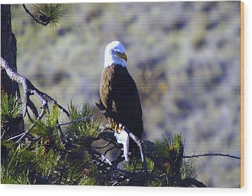 An Eagle In The Sun Wood Print by Jeff Swan