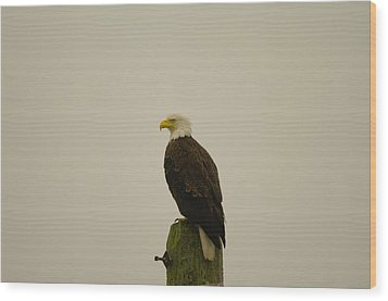 An Eagle Perched Wood Print by Jeff Swan