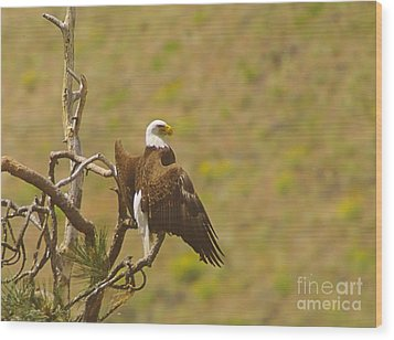 An Eagle Stretching Its Wings Wood Print by Jeff Swan