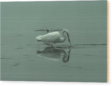 An Egret Feeding Wood Print by Jeff Swan