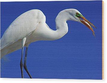 An Egret's Lunch Wood Print