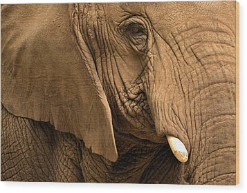 Wood Print featuring the photograph An Elephant's Eye by Nadalyn Larsen