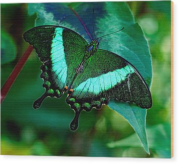 An Emerald Beauty Wood Print by Karen Stephenson