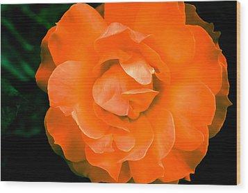 An Orange Rose Wood Print by Ronda Broatch
