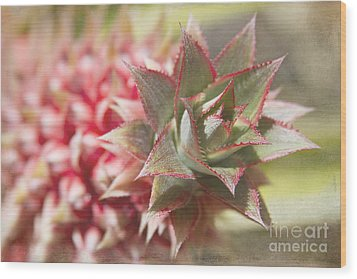 Ananas Comosus - Pink Ornamental Pineapple Wood Print