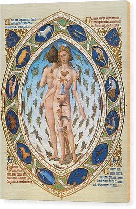 Anatomical Man Wood Print by Granger