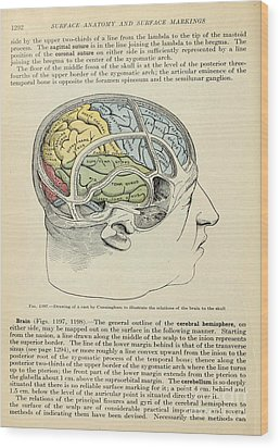 Anatomy Human Body Old Anatomical 126 Wood Print by Boon Mee