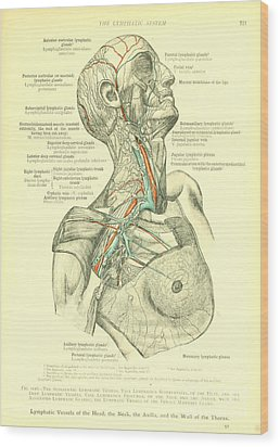 Anatomy Human Body Old Anatomical 27 Wood Print by Boon Mee