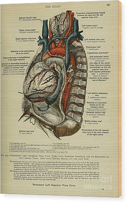 Anatomy Human Body Old Anatomical 76 Wood Print by Boon Mee