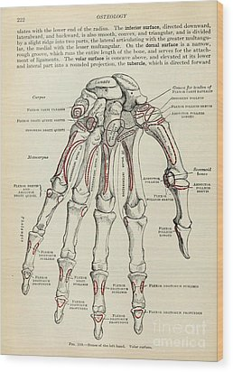 Anatomy Human Body Old Anatomical 77 Wood Print by Boon Mee