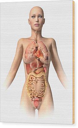 Anatomy Of Female Body With Internal Wood Print by Leonello Calvetti