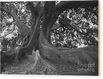 Ancestor Wood Print by Amanda Barcon