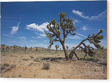 Ancient Joshua Tree Wood Print