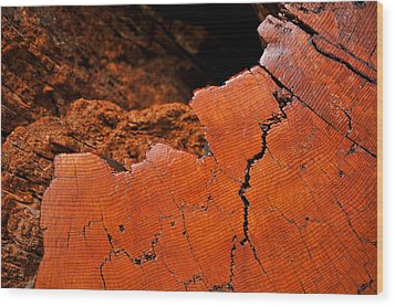 Ancient Log Wood Print by Crystal Hoeveler