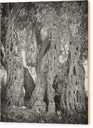 Ancient Olive Wood Print by Paul Cowan