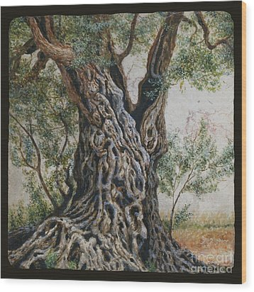 Ancient Olive Tree Trunk Wood Print by Miki Karni