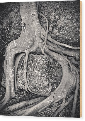 Ancient Roots Wood Print by Adam Romanowicz