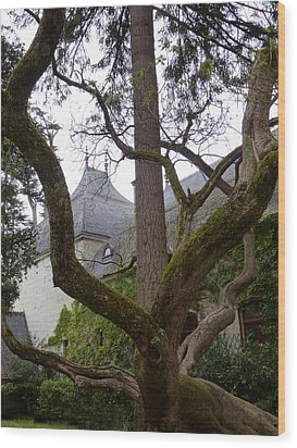 Ancient Tree At Chateau De Chenonceau Wood Print
