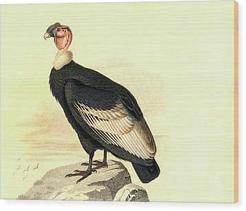 Andean Condor Wood Print by Collection Abecasis