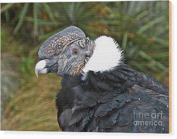 Andean Condor Wood Print