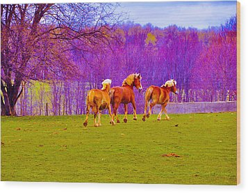 Andy's Horses Wood Print by BandC  Photography