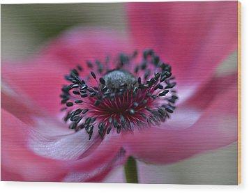 Anemone In Pink Wood Print by Julie Palencia