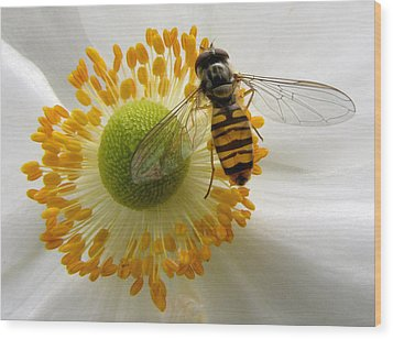 Anemone With Visitor Wood Print by Jacqi Elmslie