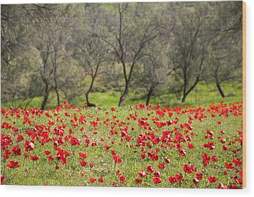 At Ruchama Forest Israel Wood Print