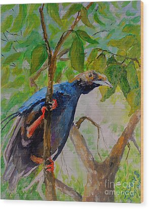 Angel Bird Of  North Moluccas Wood Print by Jason Sentuf