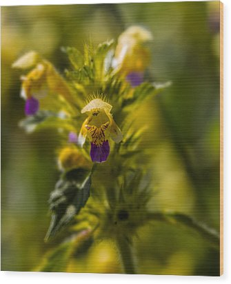 Wood Print featuring the photograph Angel? by Leif Sohlman
