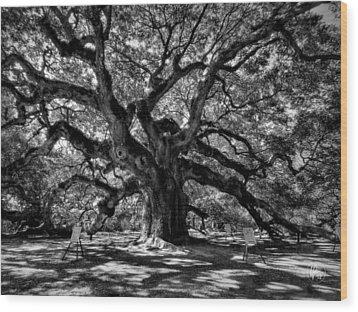 Angel Oak 002 Wood Print by Lance Vaughn