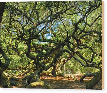 Angel Oak 006 Wood Print by Lance Vaughn