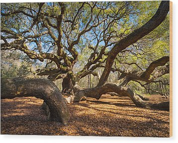 Angel Oak Tree Charleston Sc Wood Print by Dave Allen