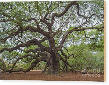 Wood Print featuring the photograph Angel Oak Tree by Dale Powell
