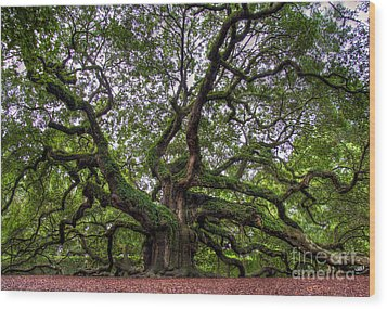 Angel Oak Tree Wood Print by Douglas Stucky