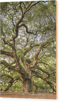 Angel Oak Tree Johns Island Sc Wood Print by Dustin K Ryan