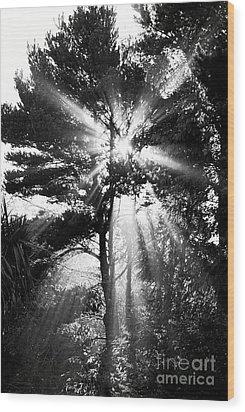 Angel Sun Wood Print