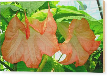 Wood Print featuring the photograph Angel Trumpet  by Kay Gilley