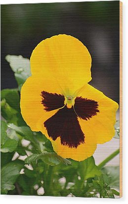Angel Winged Pansy Wood Print by Maria Urso