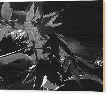 Wood Print featuring the photograph Angels Or Dragons B/w by Martin Howard